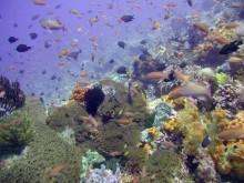 Lokasi Snorkeling di Lombok